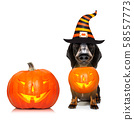 halloween  ghost  dog trick or treat 58557773