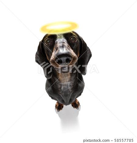 angel saint dog with halo 58557785