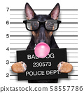 mugshot dog at police station 58557786