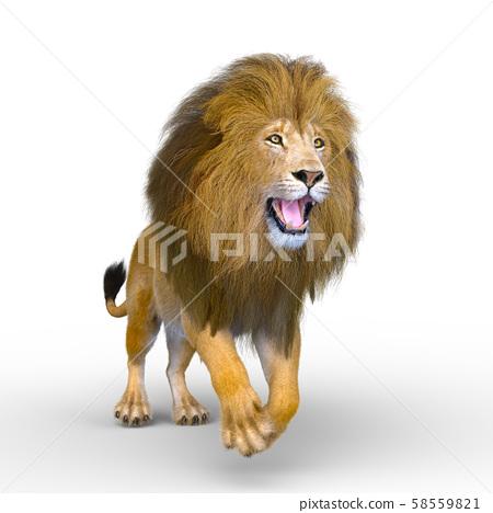 Lion 58559821