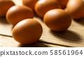 雞蛋 58561964