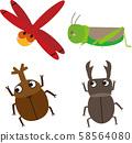 蜻蜓蚱hopper甲蟲 58564080