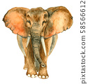 Watercolor hand drawn Elephant 58566612
