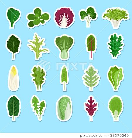 Cartoon green salad leaves stickers 58570049