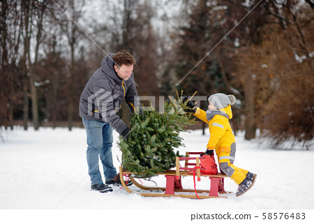 Little boy with his father lay a Christmas tree on sled 58576483