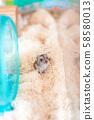 Djangarian仓鼠的图象 58580013