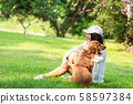 Asian lifestyle woman playing and hug young golden 58597384