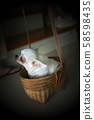 Cute chihuahua in a basket . Pet background 58598435