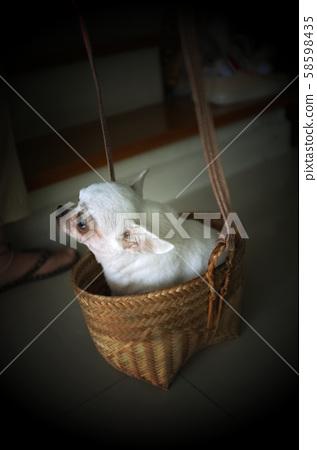 Cute chihuahua in a basket . Pet background 58598435