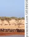 Herd of African wildebeest in grass meadow near river of Serengeti 58598658