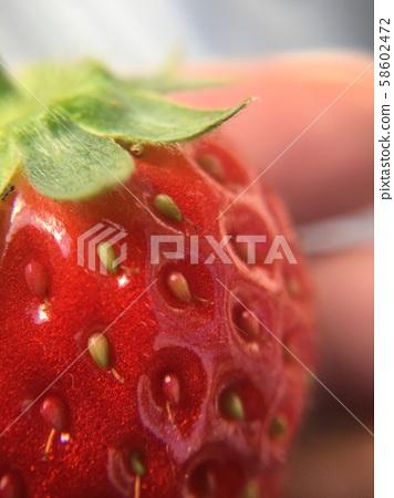 草莓 58602472
