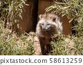 本田谷岐多摩动物园 58613259