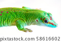 Gecko head close-up on a white background. 58616602