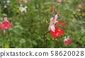 붉은꽃 58620028