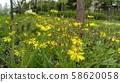 노랑선씀바귀 58620058