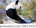 大熊猫 58623439