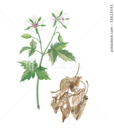 Gennoshouko, current evidence, flowers and dry leaves 58628545