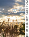 Minuma rice field autumn morning sun and eel 58634962
