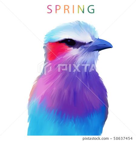五顏六色的水彩手繪翠鳥小鳥 58637454