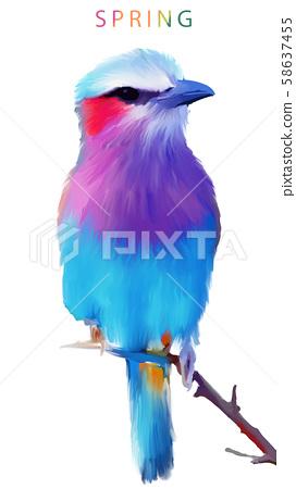 五顏六色的水彩手繪翠鳥小鳥 58637455