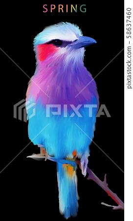 五顏六色的水彩手繪翠鳥小鳥 58637460