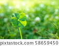 Glittering luck four-leaf clover up 58659450