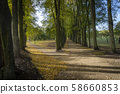 Forking road lined with colorful autumn trees 58660853