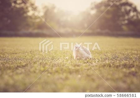가을의 황혼 산책 고슴도치 58666581