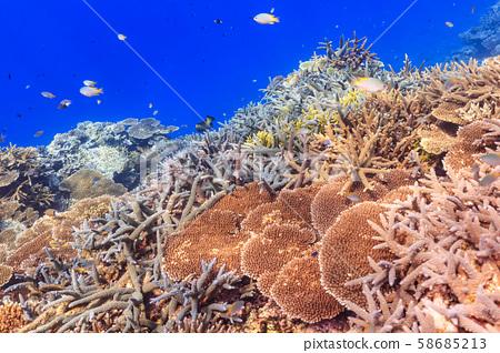 西表島潛水-美麗的分支珊瑚群 58685213