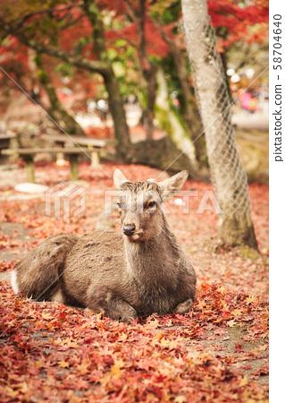 奈良公园的鹿 58704640