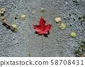 ใบไผ่เหมือนธงชาติแคนาดา 58708431