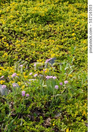 Grass scenery 58716303