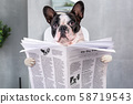 Frenchie sitting on a toilet seat with a newspaper 58719543
