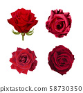 Red roses arranged 4 sets on a white background - vector 58730350