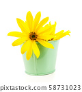 yellow flowers on white background 58731023