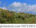 Kansas Yucca on a hillside with a fence,blue sky, and white cloud's out in the country. 58733855