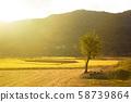 水稻在夕陽下閃耀 58739864