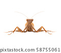Mantodea isolated on a white 58755061