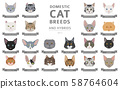 Domestic cat breeds and hybrids portraits 58764604