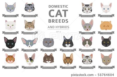 Domestic Cat Breeds And Hybrids Portraits Stock Illustration 58764604 Pixta