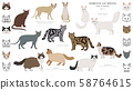 Domestic cat breeds and hybrids collection 58764615