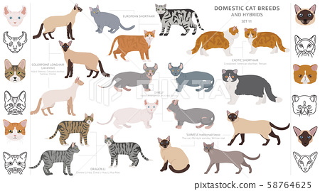 Domestic cat breeds and hybrids collection 58764625