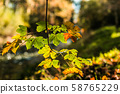 Autumn leaves. Beautiful autumn nature with 58765229
