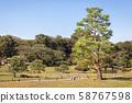 Big Old Pine Tree at Rikugien Garden in Tokyo, Japan 58767598