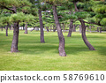 Pine Trees Near the Imperial Palace in Tokyo, 58769610