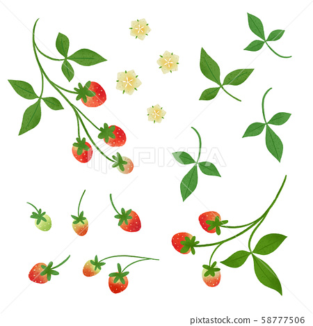 Strawberry illustration separately / rustic touch 58777506