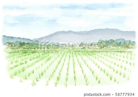 田園風光,稻田水彩 58777934