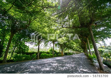 臺灣屏東潮州泗林綠色隧道Taiwan Pingtung Chaozhou Green Tunnel 58783700