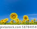 Sunflower, Tsunan-cho, Niigata 58784058