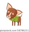 Cartoon chihuahua. Vector illustration on a white background. 58786231